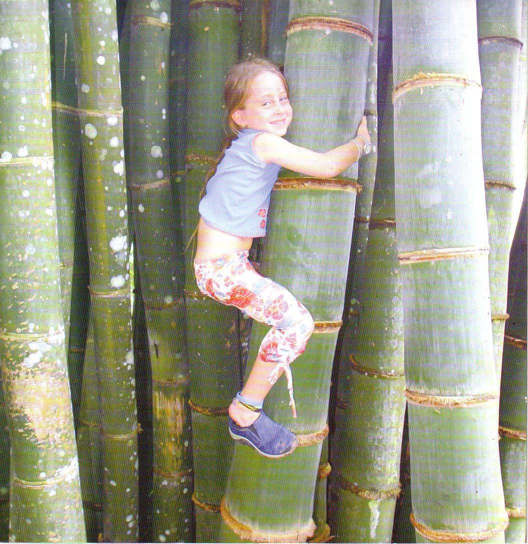 Gigantis Bamboo plantation